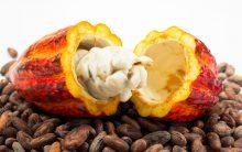 8 Dicas de Alimentos Saudáveis Para a Saúde