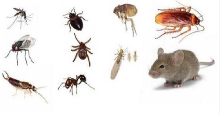 insetos ratos - dicas bem simples