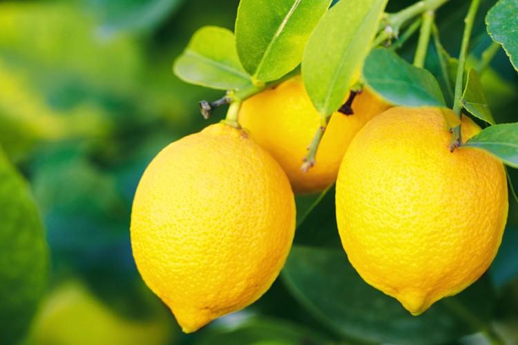 limão-limão