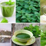 Os 14 Benefícios do Chá de Urtiga Para saúde