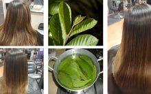 Folha da Goiabeira Ajuda a Combater a Queda de Cabelo e o Fazem Crescer Rapidamente