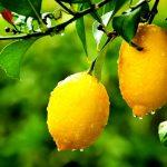 As 10 Receitas de Limão Para Emagrecer