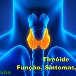 Tireóide → O que e, Sintomas, Causas e Tratamentos
