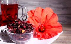 Chá de hibisco: Saiba tudo sobre essa planta que está ganhando a mesa brasileira