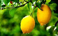 Dieta do Limão → Perca 9 Quilos em Duas Semanas