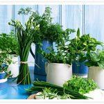 Ervas → As 5 Bebidas à Base de Ervas Para Prevenir Pedras nos Rins