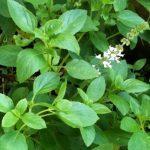 As 14 Plantas Medicinais Muito Comuns